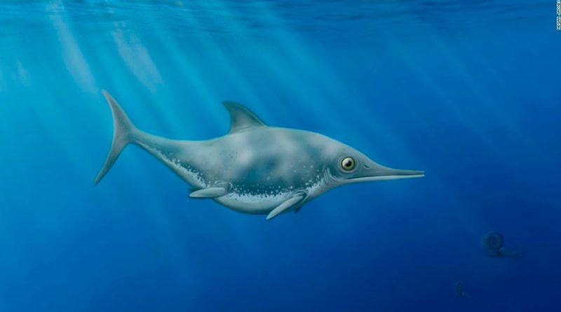 Un cazador de fósiles descubre nueva especie de 'dragón marino' frente a la costa inglesa
