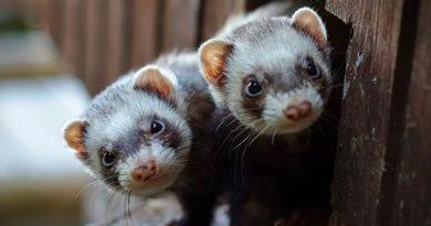 Estos son los animales más susceptibles a contraer el coronavirus