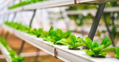 ¡Sin límites! Estudiantes mexicanas crean bioplástico para la agricultura del futuro