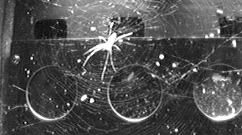 Dos arañas en la estación espacial encuentran un sorprendente truco para construir redes sin gravedad