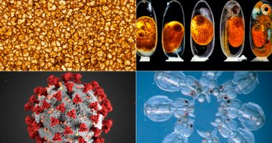 Las mejores imágenes científicas de 2020 según la revista Nature [FOTOS]