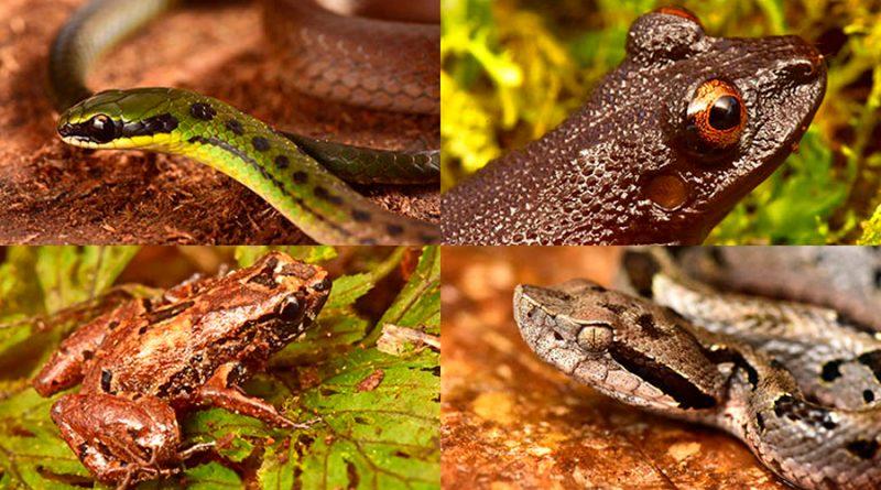 Increíbles especies descubiertas en un valle escondido de Bolivia