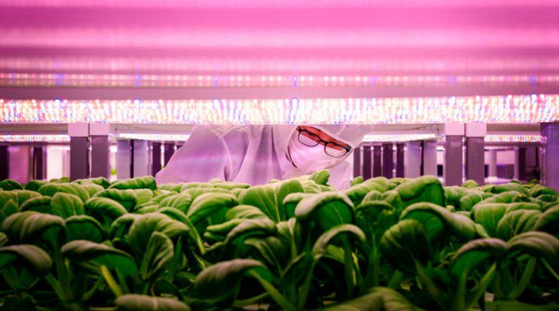 La gran apuesta de Singapur por la agricultura urbana vertical