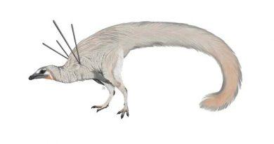 Encuentran el que posiblemente sea el dinosaurio más raro hallado hasta la fecha