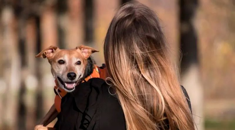 Si tienes diabetes, es posible que se la 'contagies' a tu perro, aunque no de la forma en la que crees