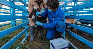 En México se desarrollan 5 vacunas covid-19, pero falta de recursos frena fase 1