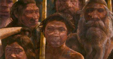 Un estudio sugiere que los antepasados del ser humano también hibernaban