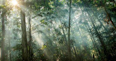 Árboles tropicales acortan su vida por encima de los 25 grados