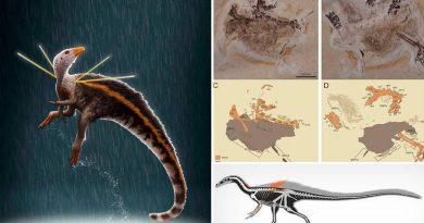 Descubren un dinosaurio en Brasil con una melena de plumas y espinas en los hombros