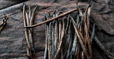 Logran el desbloqueo genético de la vainilla en EUA y su cultivo será posible en EU
