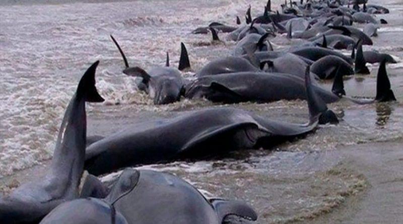 Rara enfermedad está matando a miles de delfines y científicos descubren el origen
