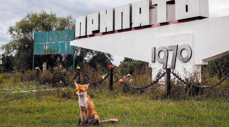Un estudio confirma que en las áreas más contaminadas de Chernóbil hay menos mamíferos