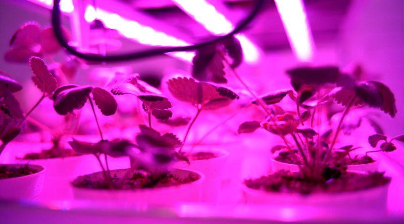 Innovadores mexicanos le apuestan a la agricultura vertical para erradicar el hambre