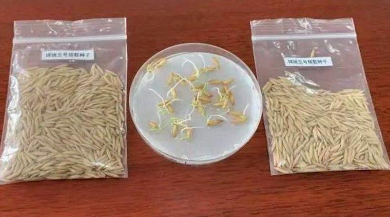 Semillas de arroz brotaron en la Luna a bordo de Chang'e 5