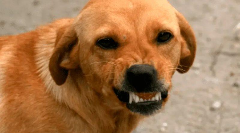 ¿Los perros detectan la maldad de la gente? Esto dice la ciencia