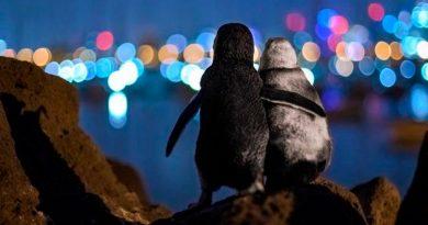 Pingüinos viudos que se abrazan, la fotografía ganadora del Ocean Photography Awards