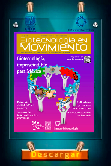 revista-ibt22
