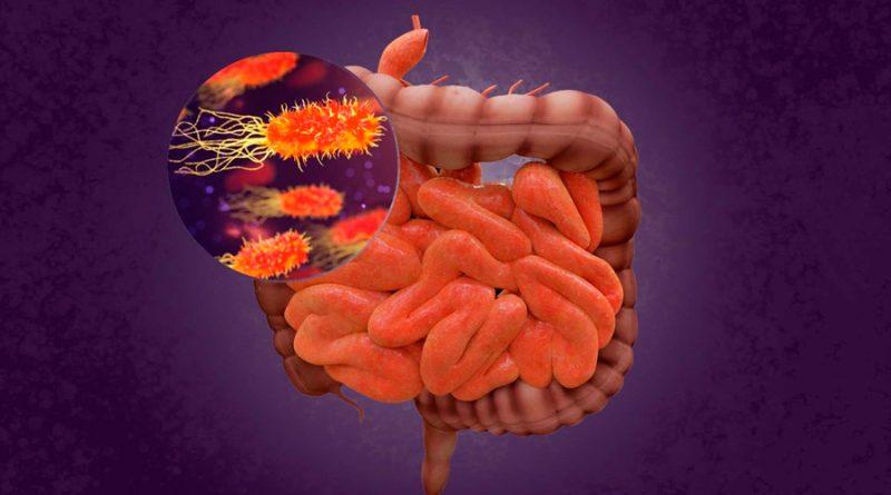 Descubren fuertes vínculos entre los microbios intestinales, dieta y salud