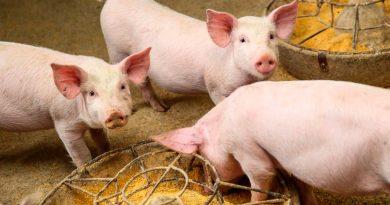 Crean revolucionaria proteína artificial con la que se busca alimentar a animales en todo el mundo