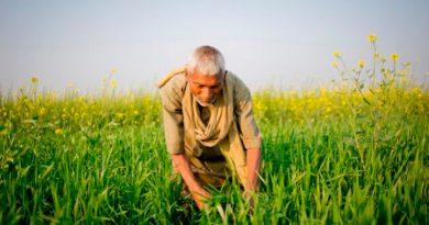 México dice adiós al glifosato y al maíz transgénico