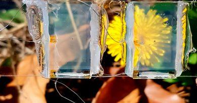Celdas solares trasparentes dan pie a ventanas que generarán electricidad