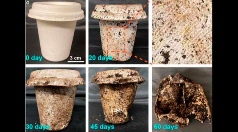 Vasos de usar y tirar que se descomponen en 60 días