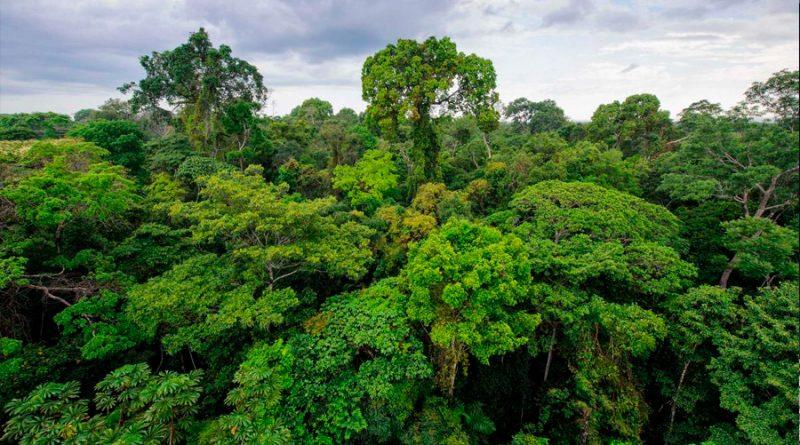 La selva Amazónica se secará para 2064, afirma un científico
