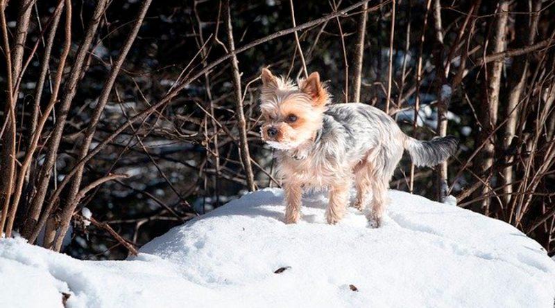 ¿Cuánto frío puede aguantar un perro? Esta tabla puede servir de guía orientativa