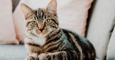 Los gatos aumentan la empatía en los niños con autismo