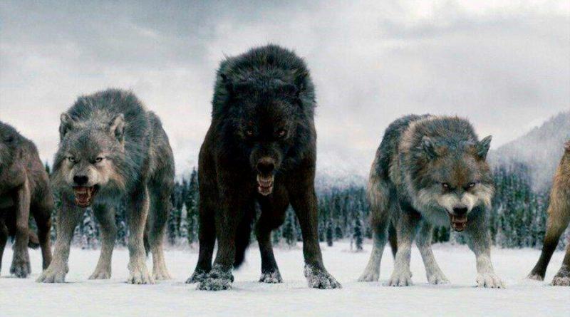 Análisis de ADN antiguo revela secretos de los lobos gigantes, famosos en la serie Juego de tronos