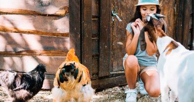 Los humanos, mamíferos y aves que viven en el mismo lugar se comportan de manera similar
