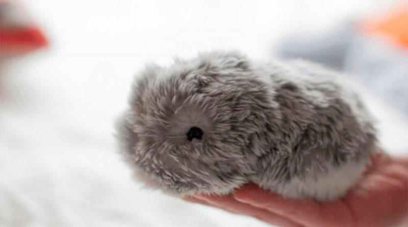 Moflin, la mascota con IA que siente emociones y evoluciona para los que no pueden tener animales en casa