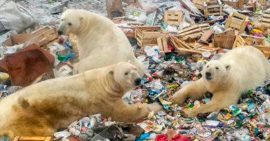 Sombrío panorama para la supervivencia de todas las especies