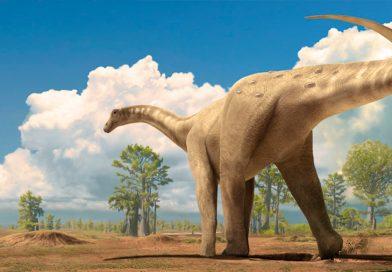 Un dinosaurio argentino puede ser el mayor animal terrestre conocido