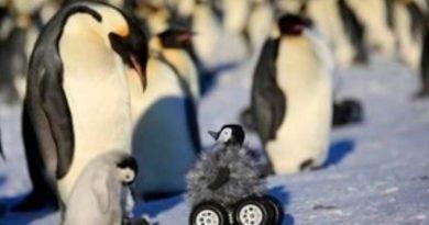 Ayuda robótica para pingüinos de la Antártida