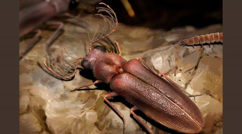 Hallan un escarabajo de luz de hace 100 millones de años preservado en ámbar