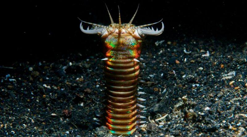 Revelan que fondo marino estuvo habitado por gusanos depredadores gigantes