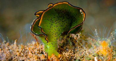 Increíbles animales pueden llevar a cabo la fotosíntesis como las plantas