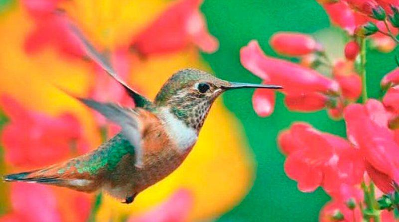 UNAM, al rescate del hábitat de colibríes