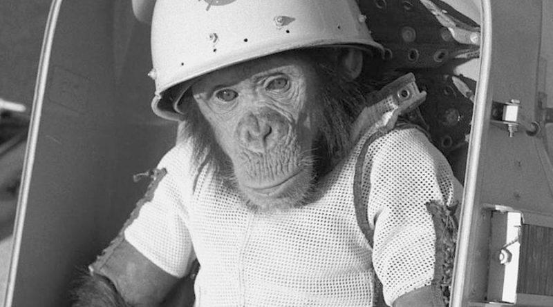 Este fue el primer primate que viajó al espacio hace 60 años
