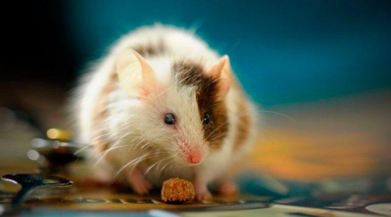 Científicos crean sistema para monitorear animales con IA