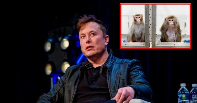 Empresa de Musk implanta chip a un mono para que use videojuego con la mente