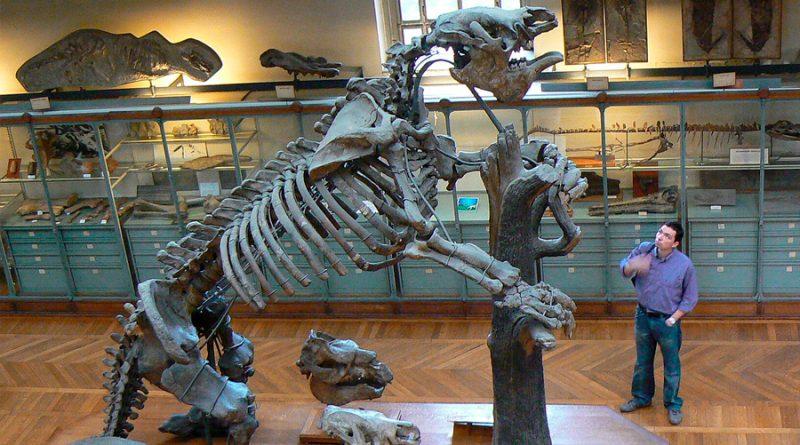 Encuentran el fósil de un perezoso ancestral tan grande como un elefante