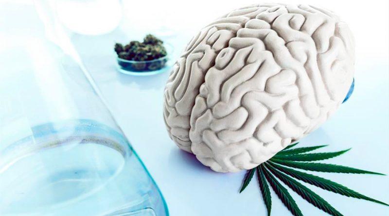 Un estudio evidencia que el consumo frecuente de cannabis reduce el coeficiente intelectual