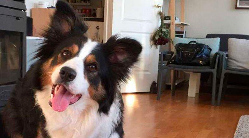 ¿Pueden los perros aprender nuevas palabras con rapidez?
