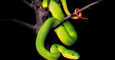 """Investigan visión infrarroja de las serpientes y el modo en que pueden """"ver"""" en la oscuridad"""