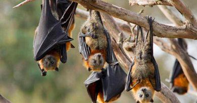 Hallan murciélagos con un virus que ayudaría a entender el Sars-COV-2