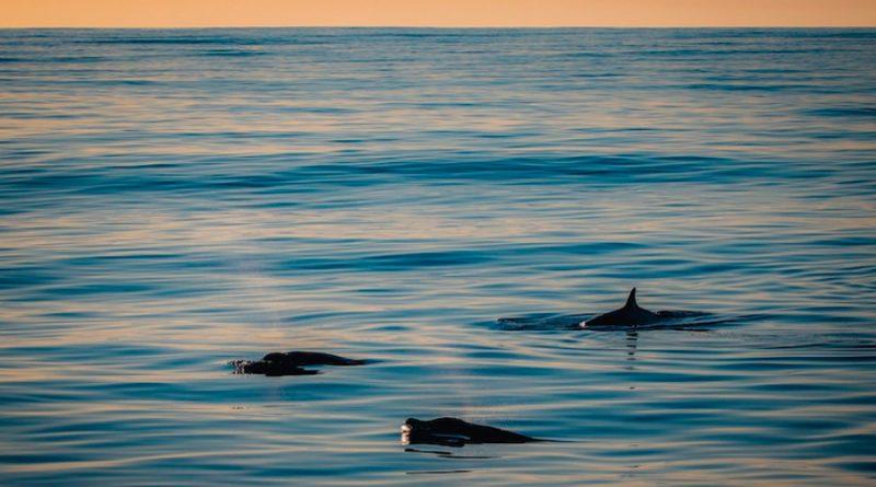 Grupo investigador detecta una posible nueva especie marina en México