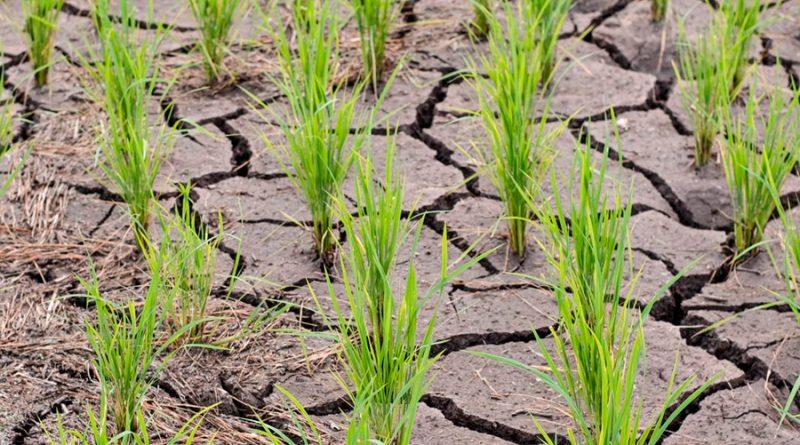 Las plantas perciben los suelos duros gracias a señales químicas