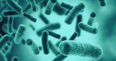 Algunas bacterias se vuelven inactivas para esquivar a los antibióticos